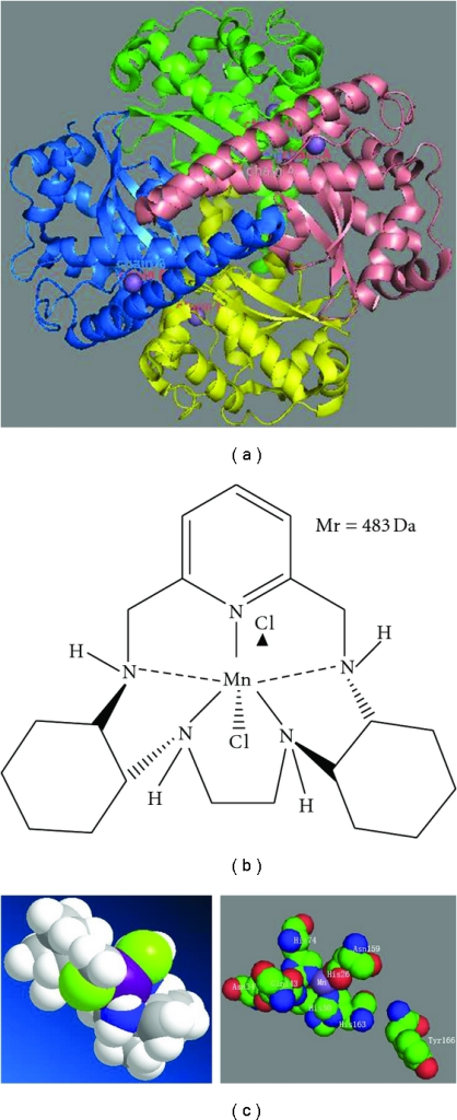 Question about the active site structure of MnSOD?