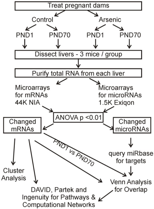 Diagram of experimental design and analytical flow for mRNA and miRNA data.