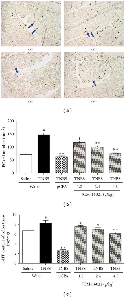 Effects of JCM-16021 on enterochromaffin (EC) cell density and 5-HT content in the colon tissue of PI-IBS rats. (a) shows the representative EC cells (arrowhead) in colonic mucosa of the (A1) normal rats, (A2) PI-IBS rats, (A3) pCPA treated rats, and (A4) high dose JCM-16021 treated rats (Scale bar, 200 μm). Statistical graph of EC cell density is shown in (b), and 5-HT content in (c). Data are presented as mean ± S.E.M., n = 5 per group. #P < 0.05 versus normal rats, *P < 0.05, **P < 0.01 versus PI-IBS rats (t-test).