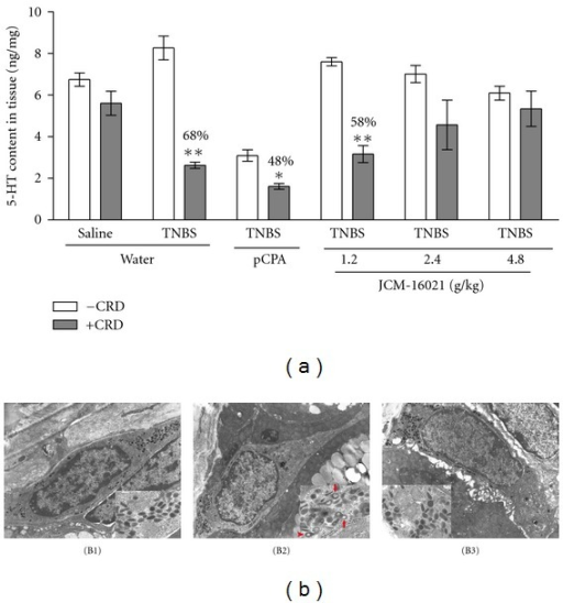 Effect of JCM-16021 on mechanical stimuli (CRD) induced 5-HT release in PI-IBS rats. (a) shows the statistical analysis of colonic 5-HT content in PI-IBS rats with or without CRD treatment. (b) shows the representative electron microsgraphs of EC cells and their secretory granules (inset) from the (B1) normal rats, (B2) PI-IBS rats, and (B3) high dose JCM-16021 treated rats (×8900; inset: ×10000). Activated EC cell is characterized by the clear secretory granules without cores (red arrow), or secretory granules with eccentric cores (red arrowhead) in it. Data are shown as mean ± S.E.M., n = 5 per group. *P < 0.05, **P < 0.01 versus the same group without CRD treatment (t-test).