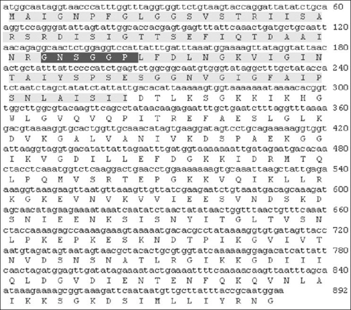 Nucleotide sequence and deduced amino acid sequence of