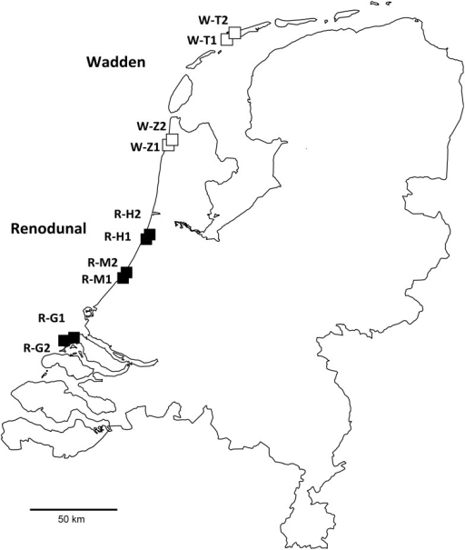 Sampling sites along the coast of the Netherlands.Sites corresponding to the Renodunal and Wadden geological districts are marked with black and white squares, respectively.