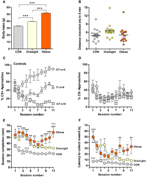 Overweight and obese mice show poor acquisition of food-rewarded pavlovian conditioned learning. (A) Body masses of control (CON; normal chow, n = 18), overweight (O/weight; low fat-high carbohydrate diet; n = 16) and obese mice (high fat-high carbohydrate diet, n = 16) at the start of experimentation. (B) Locomotor activity, measured in an open field arena, of CON, O/weight and Obese mice before behavioral testing commenced. (C) Relative number of CS+ approaches and CS- approaches (D) during each session; only CON mice displayed different conditioned responses (cf. Harb and Almeida, 2014), characterized as sign-tracking (ST, predominantly approached the CS+; n = 4), goal-tracking (GT, predominantly approached the US; n = 8), and intermediate-tracking (IT, alternated between CS+ and US with approximately equal frequency; n = 6). Autoshaping was monitored over 11 sessions; in each session, mice received 15 CS+ and 15 CS- presentations. (E) Time in min needed to complete successive autoshaping sessions. (F) Mean latency (s) to retrieve food reward during consecutive training sessions. Data are means ± s.e.m. ***In (A) denotes p < 0.001. *, **, ***In (E,F) indicate differences between CON and obese groups at p < 0.05, 0.01, and 0.001, respectively. †, ††, †††In (E,F) indicate differences between O/weight mice vs. CON and Obese mice at p < 0.05, 0.01, and 0.001, respectively.