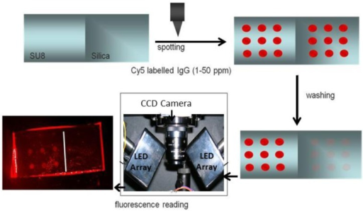 Scheme of the procedure employed to test the selective antibody immobilization on SU-8 planar chips using microarrays and Cy5 labeling.