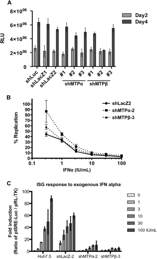 MTP protein depletion leads to suppression of the type I IFN response. MTP depletion does not directly affect HCV replication but suppresses the type I IFN response. (A) Huh7.5 cells were transduced with the indicated lentiviral shRNA vectors, and after 24 h of incubation, cells were infected with HCV Jc1-p7NLuc2A (MOI = 0.05 FFU/cell) (Fig. 5). Infected cells were lysed at days 2 and 4 after HCV infection and assayed by the nanoluciferase A Glo assay to assess HCV replication. (B) MTP depletion renders host cells less responsive to exogenous IFN-α to suppress HCV replication. Huh7.5 cells were transduced with the indicated lentiviral shRNA vectors. Two days later, cells were subsequently infected with HCV (MOI = 0.05 FFU/cell), incubated for 4 days, and plated in a 96-well plate at 1 × 104 cells per well for IFN-α treatment for a further 2 days. The levels of viral replication were assayed using Nano-Glo luciferase assay reagent as per the manufacturer's instruction (n = 6). (C) MTP depletion reduces the ISG response. Lentiviral-vector-mediated shRNAs as indicated were used to downregulate MTP gene expression. Transduced cells were transfected with pISRE-Luc and pRL-TK and then stimulated with IFN-α at the indicated concentrations for 5 h prior to analysis by the dual-luciferase reporter assay (n = 4). Error bars represent SEM.