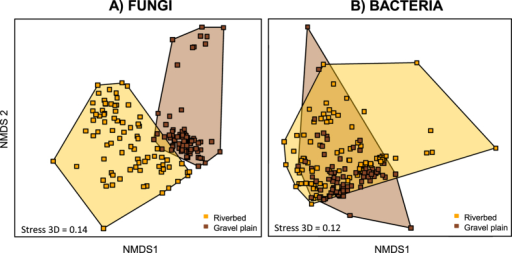 NMDS ordination of fungal and bacterial community structure inferred from OTUs relative abundance (obtained from T-RLFPs from all water treatments and all sampling times combined).Different clusters denotes for communities originated from the riverbed (orange) and the gravel plain (brown).
