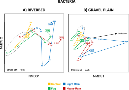 "NMDS ordination of bacterial community structure inferred from OTUs relative abundance (obtained from T-RLFPs) originated from the riverbed (A) and gravel plain (B) Different colors denotes for the different water treatments. Points in the ordination are mean of the 3 replicated microcosms per treatment and per sampling time (4 h, 1, 2, 8, 12, 28 and 36 days). Arrows between points revealed the shifting direction of each community between sampling time and grey dashed line surrounds the first sampling date of each treatment. Black arrows indicates the direction of the experimental variable ""moisture levels in the microcosms"" significantly fitted with the bacterial community structure (permanova, P < 0.05)."