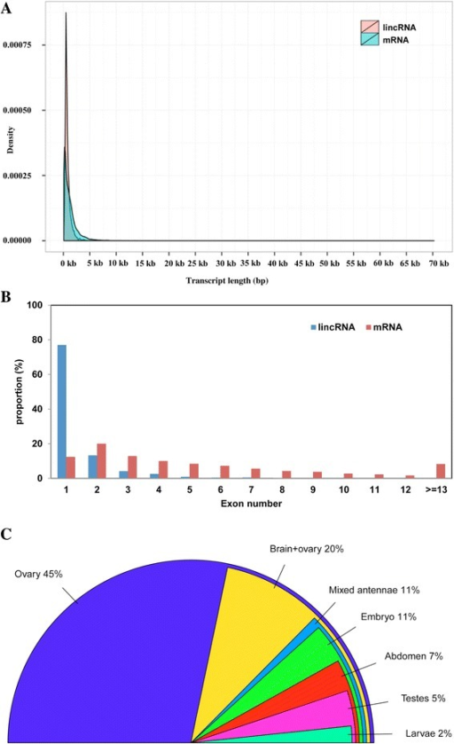 Characteristics of Western honey bee (A. mellifera) lincRNAs. a Length distribution of lincRNAs and mRNAs. b Distribution of exon number in lincRNAs and mRNAs. c Percentage of lincRNAs specifically expressed in various A. mellifera tissues