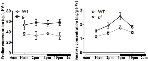 Analysis of proline and sucrose contents in WT and osgi plants. Proline and sucrose contents in leaves of 15-day-old WT and osgi plants grown under normal conditions. All data represent the mean of three biological replicates, with error bars indicating SD. The unfilled and filled bars below the x-axis indicate times of lights-on and lights-off, respectively.