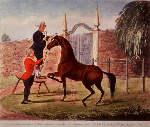 <p>The first in a series of four numbered prints satirizing the recently opened Royal Veterinary College in London. In this print, two men crop the ears of a horse in front of the gate of the Royal Veterinary College. One man holds the nose of of the horse with a crop, while the other man stands on a table and clips the ear of the horse. Blood spurts from the horse.</p>