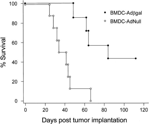 Survival advantage in tumor-bearing mice treated with modified bone marrow DCs. 3 d after the establishment of lung metastases with  intravenous administration of 3 × 104 CT26.CL25 tumor cells, BALB/c  mice were immunized with bone marrow DCs modified with Adβgal or  AdNull. The animals were not killed, but were followed for survival. The  data is expressed as percent survival as a function of time. Survival for  mice that were treated with bone marrow DC–Adβgal was significantly  prolonged over the bone marrow DC–AdNull control, as determined by  log-rank analysis of the Kaplan-Meier survival curves (P <0.002).