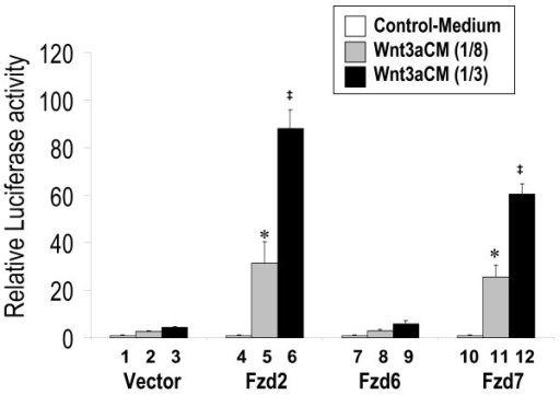 Fzd2 and Fzd7, but not Fzd6 mediate Wnt3a stimulation of canonical Wnt signaling. H441 cells were transfected with pSV-β-gal (Promega, WI) and STF, plus expression constructs for Fzd2, Fzd6, or Fzd7. An equal quantity of control vector was used as negative control. Twenty-four hours after transfection, cells were treated with L-CM and Wnt3aCM. Two dilutions of Wnt3aCM (1/8 or 1/3) were applied. Equal amounts of conditioned media were used in each assay. Luciferase values representing STF activities were normalized to beta-galactosidase for transfection efficiency. Values of the assays treated with L-CM alone were adjusted to unity to normalize all other experimental values in the same group. * indicates p < 0.05 when compared with data of bar 2. ‡ indicates p < 0.05 when compared with data of bar 3.