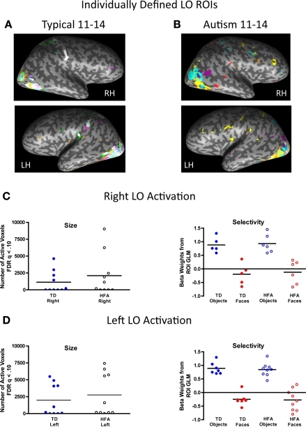 Inter-subject variability in location, size, and magnitude of object-selective activation in the lateral occipital (LO). The individually defined object contrast map for each participant in each group, represented in a unique color, was thresholded using the FDR procedure (q < 0.10) and overlaid onto a single inflated brain. The respective group-defined ROIs are illustrated in white. There was high consistency in the location of object-selective activation across the groups, particularly in the left LO. (A) Fifty percent of the TD individuals exhibited object-selective activation in the right LO, with 40% in the TD group-defined right LO ROI, and 70% of the TD individuals exhibited object-selective activation in the left LO, all of whom showed overlapping activation in the TD group-defined left LO. (B) Similarly, 60% of the HFA individuals exhibited object-selective activation in the right LO and all of these individuals exhibited object-selective activation in the right LO, as defined by the TD group, and 90% of the HFA individuals exhibited object-selective activation in the left LO with 70% of these individuals showed overlapping activation in the TD group-defined left LO. (C,D) There were no group differences in the extent (total number of active voxels) or magnitude of object-selectivity (difference in beta weights for objects and faces from the individual subject ROI GLMs) in the right or left LO ROIs.