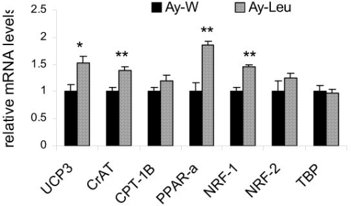 Leucine supplementation increases skeletal muscle expression of genes involved in regulating energy metabolism in Aymice. Messenger RNA levels of uncoupling protein 3 (UCP3), carnitine acetyltransferase (CrAT), carnitine palmitoyltransferase 1B (CPT-1B), peroxisome proliferator-activated receptor alpha (PPAR-alpha), nuclear respiratory factor 1 (NRF-1), nuclear respiratory factor 2 (NRF-2), and TATA-binding protein (TBP) were determined in the soleus muscle of young Ay mice after 4 months of treatment. The expression levels in leucine-treated mice are expressed relatively to the levels of the control mice. * and ** indicate p < 0.05 and 0.01, respectively, control vs. leucine-treated, n = 8.