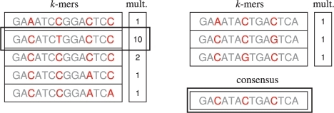 On the left is an example of a typical cluster with good coverage. There are five k-mers clustered together, with five loci having mis-alignments. We compute the consensus string (taking multiplicities into account), which we find is already in the cluster (boxed in). All the k-mers are then corrected to the consenus. On the right is an example of a common cluster in low coverage regions. The generating k-mer was sequenced three times but each time with a single error. There are three k-mers in the cluster, but the consensus (boxed in) has not been sequenced and therefore is not in the cluster. Nevertheless, we correct all the k-mers to the consensus, allowing Hammer to reconstruct new k-mers that are not present in the original data.