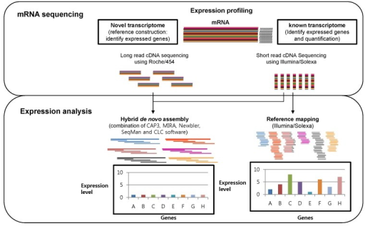 A scheme of transcriptome expression analysis through massively parallel signature sequencing (MPSS) technology and bioinformatics: The identification of expressed genes through hybrid de novo assembly with Roche/454 and Illumina/Solexa data (left) and expressed level profiling through mapping the Illumina/Solexa sequence to the expressed sequence tag reference.