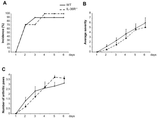 Incidence and severity of K/BxN serum transfer-induced arthritis are not reduced in IL-36 receptor (R) knockout (KO) mice. Incidence of arthritis (A), arthritis severity scores (B) and the number of affected paws (C) are shown for WT (n = 10, black line) and IL-36R KO (n = 7, dashed line) mice. (A and C) Results are shown as the mean ± standard error of the mean.