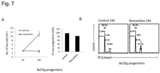 Roscovitine inhibits proliferation in neutrophil progenitor cells.(A) Left panel gives the numbers of Bcl-2-transgenic progenitor cells in control cultures and in cultures treated with roscovitine for 24 h. Right panel shows the percentages of live cells in these cultures (means/SEM of 3 independent experiments). (B) PI staining (flow cytometry analysis in linear scale) of Bcl-2-transgenic progenitor cells treated with roscovitine for 24 h. Flow cytometry plots are representative of 3 independent experiments.