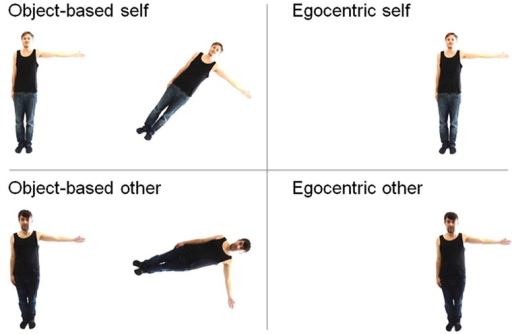 Examples of the stimuli used for the different conditions. Top stimuli show pictures of participants' own body, whereas bottom stimuli depict gender-matched other's body. Left: sample stimuli used in the same–different object-based transformation task, for disparities of 45° (top) and 90° (bottom). Right: stimuli used in the egocentric transformation task, where participants were asked to judge whether the depicted figure has their left or right arm outstretched.