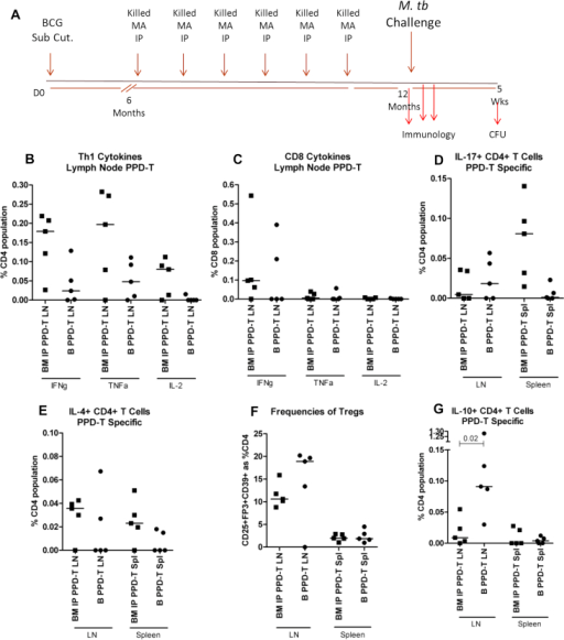 Cellular responses in BCG vaccinated mice that were or were not sensitised with MA 724 IP after BCG Responses were assayed at the 12 month time point; 4 weeks after the last dose of MA 724. Cells from inguinal lymph nodes (LN) and spleens were stimulated with PPD-T. (A) Experiment plan (B and C) IFNγ, TNFα and IL-2 production from CD4+ or CD8+ T cells in the LN, (D) IL-17 production from CD4+ T cells in the LN and spleen, (E) IL-4 production from CD4+ T cells in the LN and spleen, (F) expression of CD25, FoxP3 and CD39 on CD4+ T cells from the LN and spleen, (G) IL-10 production from CD4+ T cells in the LN and spleen. B = BCG vaccinated only, BM = BCG vaccinated mice which received MA 724. Results are expressed as a percentage of the CD4+ or CD8+ T cell population and are stimulation specific; media only control well values are subtracted. Each data point represents one mouse and the median is displayed, n = 5. The Mann–Whitney U test was used to determine statistical significance and is shown where differences were significant. Subcutaneous (Sub Cut.), Intraperitoneal (IP), M. avium (MA), Colony Forming Units (CFU), Day 0 (D0), Regulatory T cells (Tregs).