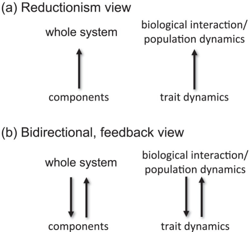 Simplified Schemes Of The Reductionism View A And Bid Open I