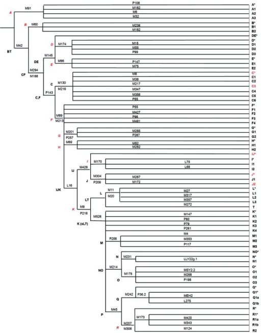 Hierarchical phylogeny of Y-chromosomal haplogroups (up to sub-haplogroup level), depicting positioning of 15 highly informative independent markers (marked in red), sufficient to infer population structure and relationship in a precise and efficient manner. All the 15 markers could be used in a single plex under similar conditions as depicted in 'Materials and Methods' section, without super-plexing with more markers.