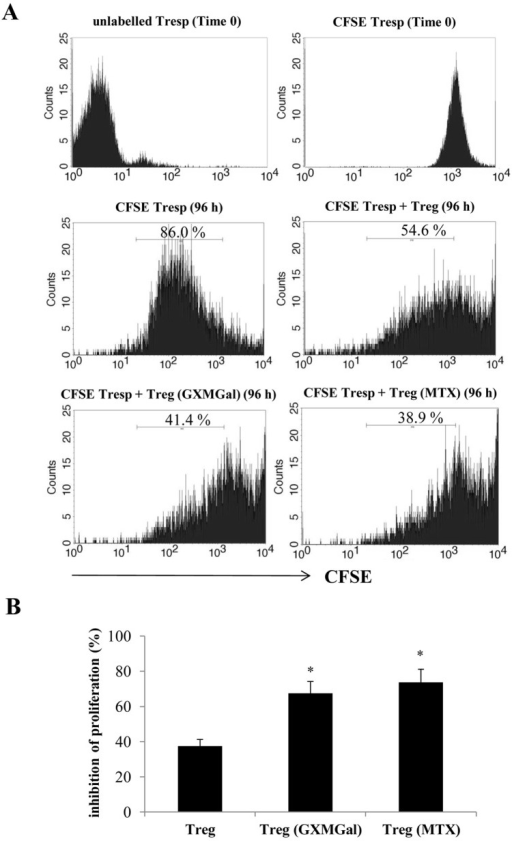 GXMGal effect on Treg cell suppressive activity.Activated RA purified CD4+ T cells (1×106/ml) were stained with CFSE (1 µM) and then co-cultured for 96 h in the presence or absence of magnetically purified autologous RA Treg cells (Tresp/Treg: 16/1) that have been pre-treated for 18 h in the presence or absence of GXMGal (10 µg/ml) or MTX (10 ng/ml). After 96 h the suppressive activity of Treg cells was evaluated by measuring the percentage of inhibition of proliferation of CD4+ responder T cells (Tresp). Representative CFSE histograms show the distribution of proliferating CFSE-labelled Tresp according to the intensity of the CFSE label from the start of the experiment (Time 0) until 96 h. Given that the initial cell labelling is fairly homogeneous, each CFSE peak represents a cohort of cells that proceed synchronously through the division rounds. The areas within each histograms delimitated by the marker represent the percentage of divided CFSE-labeled cells (A). Mean ± SEM of percentage of proliferation inhibition is shown as bar graph (B). *, p<0.05 (triplicate samples of 10 different RA; treated vs untreated cells).
