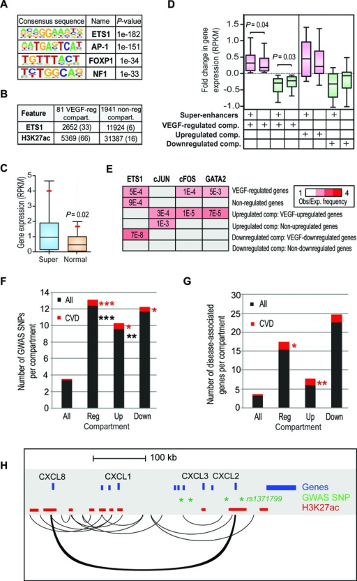 VEGF-regulated compartments are enriched for clusters of enhancers. (A) Sequence motifs associated with the regulatory regions of chromatin compartments containing VEGF-regulated genes when compared to randomly selected genomic loci. Regulatory regions were defined by a significant enrichment of H3K4me1, H3K4me2 or H3K27ac. (B) Number of ETS1 peaks and H3K27ac regions associated with VEGF-regulated compartments or non-regulated compartments. The average number per compartment is indicated in parentheses. (C) Box-and-whisker plots of the expression level (RPKM) of genes interacting with super-enhancers (blue) or normal enhancers (orange) within VEGF-regulated chromatin compartments. Boxes encompass the 25th to 75th percentile changes. Whiskers extend to 10th and 90th percentiles. The median fold change is indicated by the central horizontal bar and the mean by a red line. P-value based on one-tailed t-test is shown. (D) Box-and-whisker plots of the fold change in expression of genes interacting with super-enhancers or normal enhancers within the VEGF-regulated chromatin compartments. Boxes encompass the 25th to 75th percentile changes and whiskers extend to 10th and 90th percentiles. The median fold change is indicated by the central horizontal bar. For 81 VEGF-regulated compartments, the genes were divided into upregulated (pink boxes 1–2; fold change > 1) and downregulated genes (green boxes 3–4; fold change < 1) whereas for 16 VEGF-upregulated (pink boxes 5–6) and 9 VEGF-downregulated (green boxes 7–8) compartments all active genes are shown. P-values based on one-tailed t-test are indicated. (E) Preferential interactions of VEGF-regulated gene promoters (2 kB around TSS) with endothelial-specific lineage-determining transcription factor peaks based on ChIP-Seq data from (3,37). Heat map represents enrichment ratios, i.e. observed association frequency relative to expected frequency (association strength; red) for each comparison exhibiting significant P-values < 0.005. Non-significant enrichment pairs are represented by gray boxes. Results from the non-regulated genes are represented as median of four randomly selected sets of 108 non-regulated genes to allow comparison to 108 VEGF-regulated genes. (F and G) Overlap of SNPs and disease-associated genes in the NHGRI Catalog of Published GWAS and DisGeNET database (June 2014), respectively, with HUVEC chromatin compartments. Average (F) SNP or (G) gene count is shown for all (2022), VEGF-regulated (81), VEGF-upregulated (16), and VEGF-downregulated (9) compartments. *P-value < 0.007, ** < 0.0002, *** < 2.5E-11, hypergeometric test. (H) Significant interactions at CXCL-loci (chr4:74,433,700-75,000,000). Regulatory regions defined by H3K27ac, gene annotations and the GWAS SNPs are shown. Of the SNPs, only rs1371799 is located within a HUVEC enhancer.