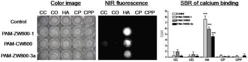 Specificity of PAM-ZW800-1, PAM-CW800 and PAM-ZW800-3a for hydroxyapatite (HA) over other calcium salts. Each fluorophore was well mixed with calcium salts for 30 min and washed with excess of PBS prior to NIR fluorescence imaging. SBR was calculated by the fluorescence intensity of each fluorophore sample versus the signal intensity of each control sample (n = 3, mean ± s.d.). ***P < 0.001. Abbreviations: CC = calcium carbonate; CO = calcium oxalate; HA = hydroxyapatite; CP = calcium phosphate and CPP = calcium pyrophosphate.