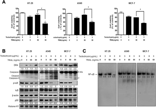 Effect of tectochrysin on cell growth, DR4 and cleaved caspase-3 expression, and NF-κB activity in TRAIL-resistant cancer cell. a HT-29, A549, and MCF-7 cells were pretreated with tectochrysin (3 μg/mL) for 24 h, the media were removed, and the cells were exposed to TRAIL (50 ng/mL in HT-29, A549, and MCF-7 cells) for 24 h. The effect of tectochrysin on resistant cancer cell growth was determined by MTT assay. The data are expressed as the mean ± SD of three experiments. *P < 0.05 compared with the control. #P < 0.05 compared with the treated TARIL treated cells. b Expression of DR4, p-IκB, IκB, p50, β-actin and histone-H1 was detected by Western blotting using specific antibodies. β-actin and histone-H1 proteins were used as internal controls. c The activation of NF-κB was investigated using EMSA as described in Methods. Each band is representative for three experiments. Values below the band are average of band density