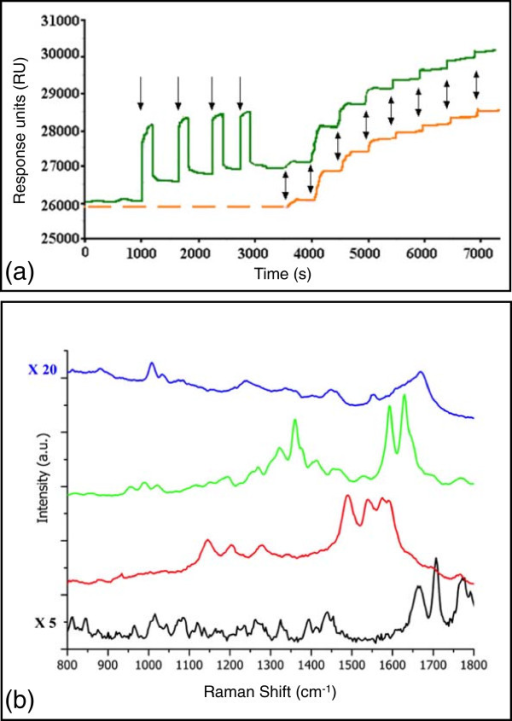 Optical characterization: SPR and SERS.(a) SPR measurements showing the avidin adsorption onto functionalized gold layer (orange) and after four injections of BSA (green). Single arrows show the BSA injection, and double arrows avidin injections at 0.03, 0.1, 0.3, 1, 3, 10, 30, and 100 nM. (b) Raman spectra of biotin-NHS powder multiplied by 5 (black), biotin on GNCs (red), avidin + biotin on GNCs (green), and avidin solution multiplied by 20 (blue).
