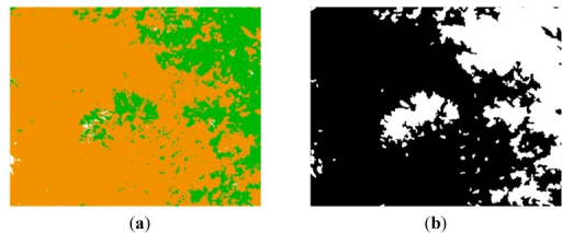 (a) Classification map; (b) Mask generated from the classification map.