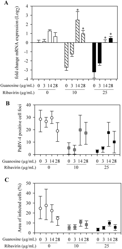 Guanosine inhibition of ribavirin antiviral activity on PaBV-4.(A) qRT-PCR results reported as mean (±SD) relative change in P gene mRNA expression, compared to control group (neither guanosine nor ribavirin added). *, compared with no guanosine within ribavirin treatment group (P <0.05, ANOVA with Holm-Sidak method). (B) Indirect immunocytochemistry results presented as median ± 25th and 75th percentiles positive stained cell foci. (C) Indirect immunocytochemistry results presented as median ± 25th and 75th percentiles of the percentage area of infected cells.