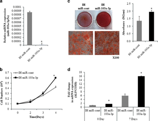 Inhibition of miR-103a-3p increases osteogenic differentiation and proliferation of hADSCs. (a) miR-103a-3p levels were determined in inhibitor control-(IH-miR-cont) or IH-miR-103a-3p–transfected hADSCs using real-time PCR. (b) hADSCs proliferation was determined by direct cell counting after oligonucleotide transfection. (c) Oligonucleotide-transfected hADSCs were grown for 10 days and, when the oligonucleotide-transfected hADSCs were grown to 80–90% confluence, osteogenic differentiation was induced for 2 weeks and determined by Alizarin Red S solution staining, which was quantified by absorbance at 562 nm. (d) Real-time PCR analysis of ALP in IH-miR-103a-3p-transfeted undifferentiated and differentiated cells. Total RNA was isolated at days after induction of differentiation. Internal control for expression analysis was GUSB. Data represent mean±s.e.m. (n=4). *P<0.05 compared with IH-miR-cont transfected hADSCs at 0 and 7 days. ALP, alkaline phosphatase; hADSC, human adipose tissue-derived stromal cell; miR, microRNA.