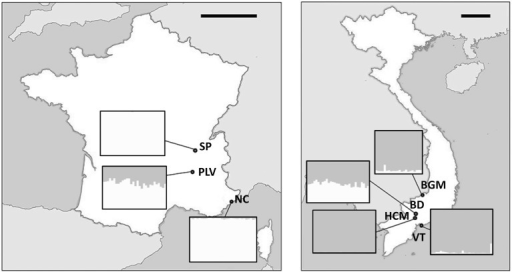 Genetic structures of Aedes albopictus populations. The map of the microsatellite genetic structure (K = 2) for each site. Each bar represents an individual and the grayscale represents the probability that an individual belongs to a population. Scale bar of the maps, 200 km. NC, Nice; PLV, Porte-lès-Valence; SP, Saint Priest; VT, Vung Tàu City; HCM, Hồ Chí Minh City; BD, Bình Du'o'ng; BGM, Bù Gia Mâp.