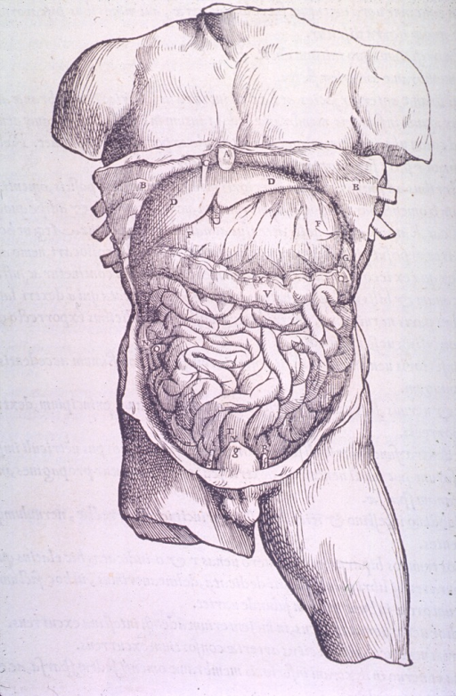 <p>The greater omentum.</p>