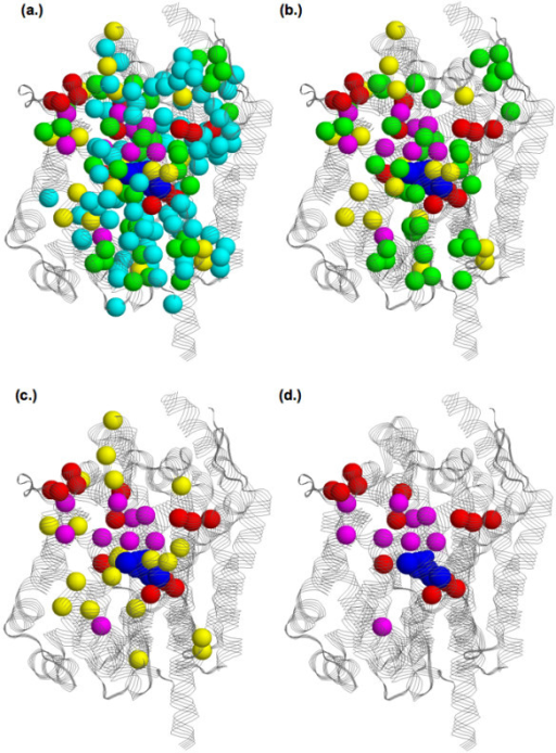 Structural superposition of all functional site predictions onto the LeuTAa structure. Spheres represent α-carbons of the predicted residues, which are color-coded by the number of methods (excluding SDPpred) that predict each residue (1 = cyan, 2 = green, 3 = yellow, 4 = red, and 5 = magenta). The four views show sites predicted by at least (a) one, (b) two, (c) three, and (d) four methods. In all cases, the leucine, sodium ions, and chloride ion are colored blue.