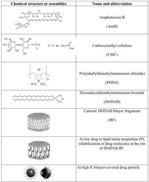 amphotericin b structure activity relationship examples