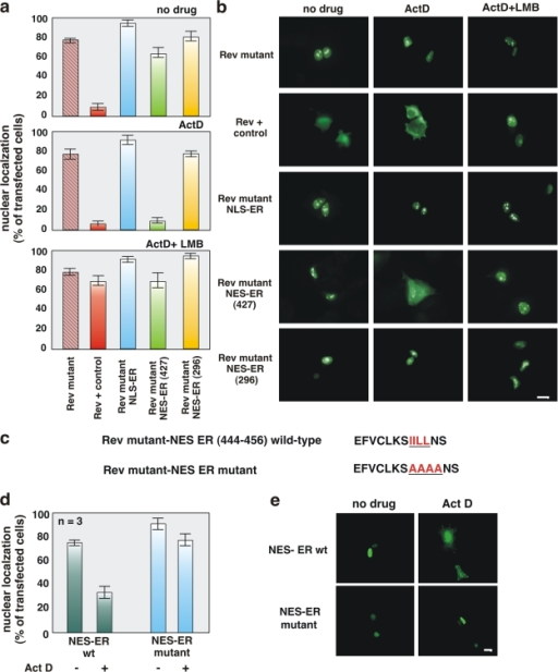 The ERα 444–456 sequence restores export activity of the NES-deficient REV1.4-GFP. Growing MCF-7 cells were used. (a and b) Cells were transfected with the indicated constructs. After transfection, the cells were left untreated (no drug) or treated with actinomycin D (ActD) at 5 μg/ml, alone or together with 5 ng/ml LMB. The subcellular distribution of GFP proteins was determined by fluorescence microscopy, and cells that fell into the category of exclusively nuclear fluorescence were scored. Data are expressed as a percentage of transfected cells, with mean values taken from at least three experiments. For each experiment, at least 600 cells were scored. (b) Images of one experiment in panel a. (c) The wt ERα 444–456 sequence (NES ERα wt) as well as its mutated version (NES ERα mutant). The putative NES-ERα sequence is indicated by the underlined amino acids, which were substituted with alanine residues in the mutant sequence. The NES-ERα wt as well as the NES-ERα mutant subcloned into the Rev mutant were transfected (d and e) in growing MCF-7 cells. After transfection, the cells were left untreated (−) or treated with 5 μg/ml Act D (+). The percentage of cells with nuclear GFP protein was determined by fluorescence microscopy and graphically shown in panel d. Data were derived from at least 600 scored cells. The results of several independent experiments were averaged. (a and d) Means and SEM are shown. n represents the number of experiments. (e) Images of one experiment in panel d. Bars, 5 μm