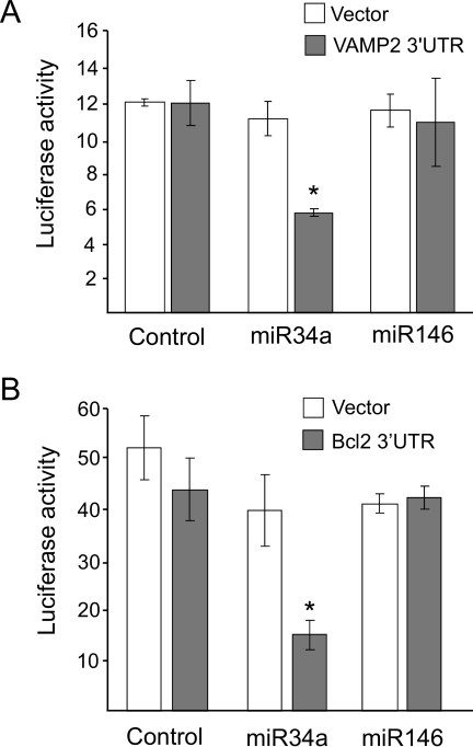 VAMP2 and BclII are direct targets of miR34a in insulin-secreting cells. A: MIN6B1 cells were cotransfected with a constitutively expressed Firefly luciferase construct; a Renilla luciferase reporter plasmid containing (▪) or lacking (Vector, □) the sequence of the 3′UTR of mouse VAMP2; and a control RNA duplex (control), miR34a, or miR146. Luciferase activities were measured 3 days later. Renilla luciferase activities were divided by the Firefly luciferase activities to correct for differences in transfection efficiencies. *Condition is significantly different (P < 0.05, n = 3) from control. B: MIN6B1 cells were cotransfected with a constitutively expressed Firefly luciferase construct; a Renilla luciferase reporter plasmid containing (▪) or lacking (Vector, □) the putative miR34 recognition sequence in the 3′UTR of BclII; and a control RNA duplex (control), miR34a, or miR146. Luciferase activities were measured 3 days later. Renilla luciferase activities were divided by the Firefly luciferase activities to correct for differences in transfection efficiencies. *Condition that is significantly different (P < 0.05, n = 3) from control.