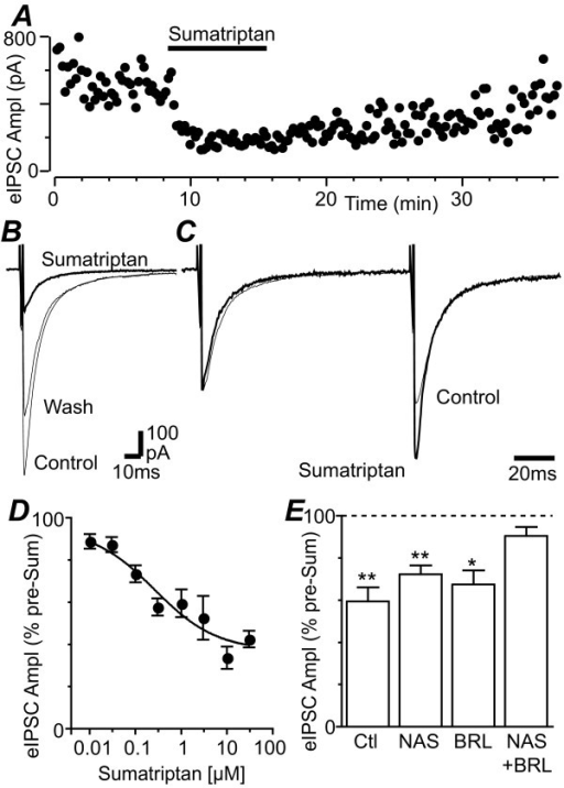 Sumatriptan inhibits evoked IPSCs in PAG neurons. (A) Time course of evoked IPSC amplitude (eIPSC Ampl) during application of sumatriptan (3 μM). (B) Averaged evoked IPSCs before (control), during application of sumatriptan (3 μM) and following washout (wash). (C) Averaged evoked IPSCs in response to identical paired stimuli (IPSC1-2 interval = 70 ms) for the traces in B, with IPSC1 normalized to demonstrate relative facilitation of IPSC2 during superfusion of sumatriptan (3 μM). (D) Concentration-response curve of the reduction in evoked IPSC amplitude produced by sumatriptan, expressed as a percentage of the pre-sumatriptan level, with a logistic function fitted to determine the IC50. (E) Bar chart showing the evoked IPSC amplitude in the presence of sumatriptan (1 μM), expressed as a percentage of the pre- sumatriptan level, in neurons which received no prior treatment (control) and those which were pre-incubated in BRL15572 (10 μM) and/or NAS181 (10 μM). In (E) *, ** denote p < 0.05, 0.01. Traces in (A – C) are from the same neuron.