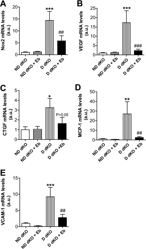 Ebselen attenuates ApoE−/−GPx1−/− (dKO) aortic mRNA expression after 10 weeks of STZ-induced diabetes. (A) Nox2, (B) VEGF, (C) CTGF, (D) MCP-1, and (E) VCAM-1 quantitative RT-PCR levels were expressed relative to nondiabetic dKO levels, which were arbitrarily assigned a value of 1. Bars, mean ± SEM (n = 7–9 aortas/group). ***P < 0.001, **P < 0.01, *P < 0.05 vs. nondiabetic dKO aortas; ###P < 0.001, ##P < 0.01 vs. diabetic dKO aortas. D, diabetic; Eb, ebselen; ND, nondiabetic.