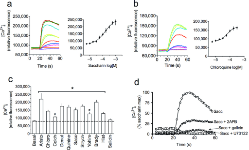 Bitter tastants of diverse structures evoke increases in [Ca2+]i in human airway smooth muscle cells. Studies were performed with cultured primary ASM cells loaded with Fluo-4 AM. (a, b) [Ca2+]i transients and dose response curves to saccharin and chloroquine from 5−6 experiments. (c) Maximal [Ca2+]i responses to 1.0 mM of the bitter tastants aristocholic acid, chloroquine, colchicine, denatonium, quinine, saccharin, salicin, strychnine and yohimbine, and the bronchoconstrictive Gq-coupled agonists histamine (0.1 mM) and bradykinin (0.01 mM). Results are from 4−6 experiments. *, P < 0.01 vs. basal; #, P < 0.05 vs. denatonium. (d) The [Ca2+]i response to bitter tastant is ablated by the PLC inhibitor U73122 and the βγ antagonist gallein, and attenuated by the IP3 receptor antagonist 2APB. These studies were performed in the absence of extracellular calcium. Results shown are from a single representative experiment of at least three performed.