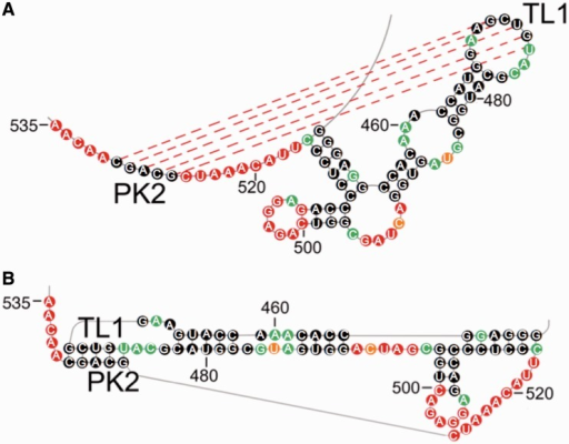 TL1/PK2 pseudoknot interaction in DENV-MINI RNA. (A) SHAPE-predicted hairpin-type pseudoknot interaction comprises two helical regions, including base paring between PK2 (G526–C530) and TL1 residues (G470–U474), as well as the stem of the leftmost hairpin (C462–G466 and C478–G482), and three single-stranded loops: A468–G470, U474–C476 and C516–C525. (B) The 2D map of TL1/PK2 interaction forming H-type pseudoknot generated by PseudoViewer3 (32).