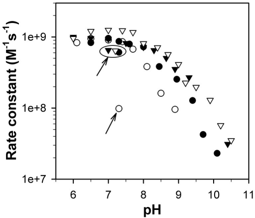 RP-mutant CaMnSODc is more subject to inactivation by pH than the wild type.Rate constants as a function of pH were determined by fitting the disappearances of low doses of O2− ([O2−]:[MnSOD] from 1–3) to first-order processes. The enzymes were WT ScMnSOD (solid triangle), K182R, A183P ScMnSOD (hollow triangle), WT CaMnSODc (solid circle) and K184R, L185P CaMnSODc (hollow circle). The data points circled and/or indicated with an arrow were measured after the pH was adjusted from 9–9.5 to neutral. The sample solutions contained 1 µM (in Mn) MnSOD in 10 mM potassium phosphate (pH 7), 10 mM sodium formate and 10 µM EDTA.