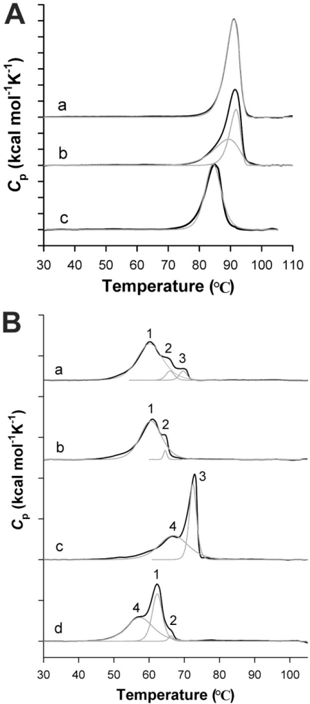 Thermostability of WT and RP-mutant ScMnSOD and CaMnSODc.The S. cerevisiae enzymes in (A) are: (a) as-isolated ScMnSOD, (b) oxidized ScMnSOD and (c) as-isolated K182R, A183P ScMnSOD. The C. albicans enzymes in (B) are: (a) as-isolated CaMnSODc; (b) reduced CaMnSODc; (c) oxidized CaMnSODc and (d) as-isolated K184R, L185P CaMnSODc. Unfolding transitions are shown in black lines. The components (gray) were deconvoluted using a two-state irreversible model for WT ScMnSOD and a non-two-state reversible model for RP-mutant ScMnSOD, and WT and RP-mutant CaMnSODc. Reduced or oxidized enzymes were prepared by adding sodium hyposulfite or potassium permanganate to the sample solution prior to the DSC scan.
