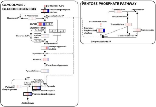 Kegg Glycolysisgluconeogenesis Pathway And Pentose Pho Open I