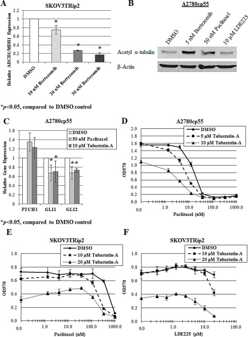 Modification of microtubule dynamics plays a role in the sensitization of paclitaxel and LDE225 by bortezomibA) Gene expression of ABCB1/MDR1 was examined in SKOV3TRip2 cells treated with DMSO or bortezomib at the indicated doses for 72 hours, using quantitative PCR. *P < 0.05, compared to DMSO vehicle control. B) Protein expression of acetylated α-tubulin was examined in A2780cp55 cells treated with DMSO, bortezomib, paclitaxel or LDE225 for 24 hours using Western blot analysis. -actin was used as a loading control. C) Gene expression of PTCH1, GLI1 and GLI2 was examined in A2780cp55 cells treated with DMSO, paclitaxel or tubastatin-a for 24 hours, using quantitative PCR. *P < 0.05, compared to DMSO vehicle control. D) A2780cp55 and E) SKOV3TRip2 cell viability following exposure to DMSO or tubastatin-a combined with increasing concentrations of paclitaxel. F) SKOV3TRip2 cell viability following treatment with DMSO or tubastatin-a combined with increasing concentrations of LDE225. Cell viability was determined using MTT assay. Data are representative of at least 3 independent experiments.