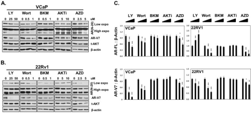 Impacts of PI3K/AKT inhibitors to AR protein levels in VCaP and 22Rv1.(A) VCaP and (B) 22Rv1 cells were treated with increasing doses of PI3K/AKT inhibitors LY294002 (0, 25, 50 uM), Wortmannin (0, 0.5 and 1 uM), BKM120 (0, 0.5 and 1 uM), AKTi (0, 5 and 10 uM) or AZD5363 (0, 2.5 and 5 uM) for 18 hours. Protein lysates were immunoblotted with AR (N-20), AR-V7, Pan-AKT, phosphor-AKT (ser473) and β-Actin antibodies. (C) Results were repeated at least three independent experiments. Densitometry analysis of protein bands were measured by the Image J software and plotted as mean+SEM. One-way ANOVA followed by student t-test was performed with * as P<0.05, ** as P<0.01 and *** as P<0.001.