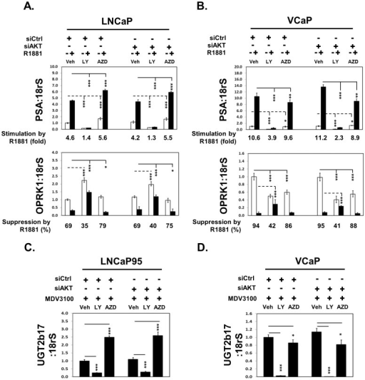 LY294002 and AZD5363 affect AR and AR-V7 transcriptional activity in PCa cells.(A) LNCaP and (B) VCaP cells were transfected with control or AKT1–3 siRNAs for 48 hours and treated with vehicle or 1 nM R1881. Cells were also co-treated with vehicle, 50 uM LY294002 or 5 uM AZD5363 for 18 hours. Real-time PCR assays measured PSA and OPRK1 mRNA levels. (C) LNCaP95 and (D) VCaP cells were transfected with control or AKT1–3 siRNAs for 48 hours and treated with vehicle, 50 uM LY294002 or 5 uM AZD5363 in the presence of 5 uM MDV3100 for 18 hours. Real-time PCR assays measured UGT2b17 mRNA levels. Results were from three independent RNA extractions with triplicate real-time PCR assays on each RNA sample. Student's t-tests were performed comparing between vehicle and LY294002/AZD5363 treatments with * as P<0.05; ** as P<0.01 and *** as P<0.001.